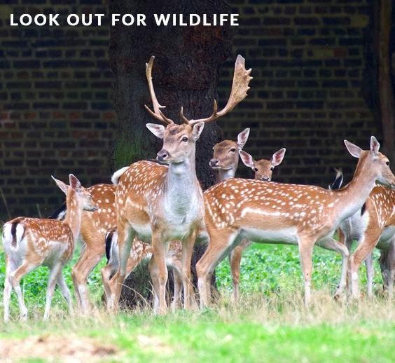 Wildlife at Greenwich