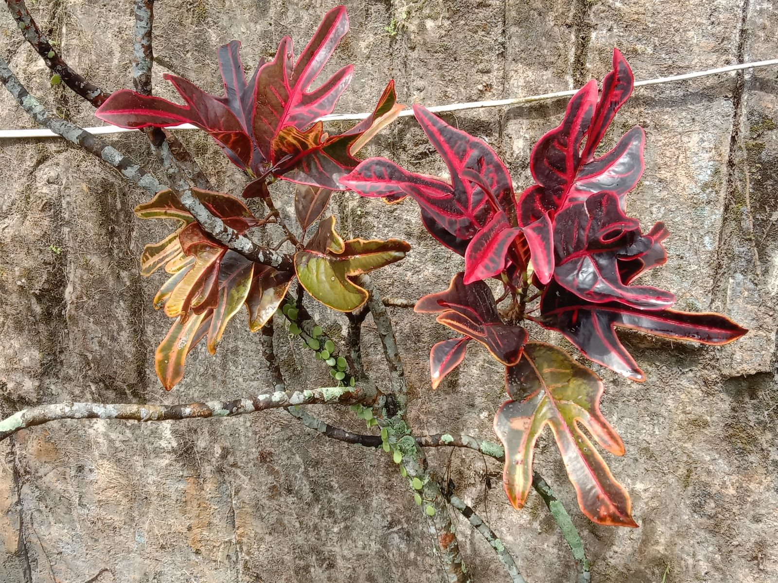 tanaman tropis