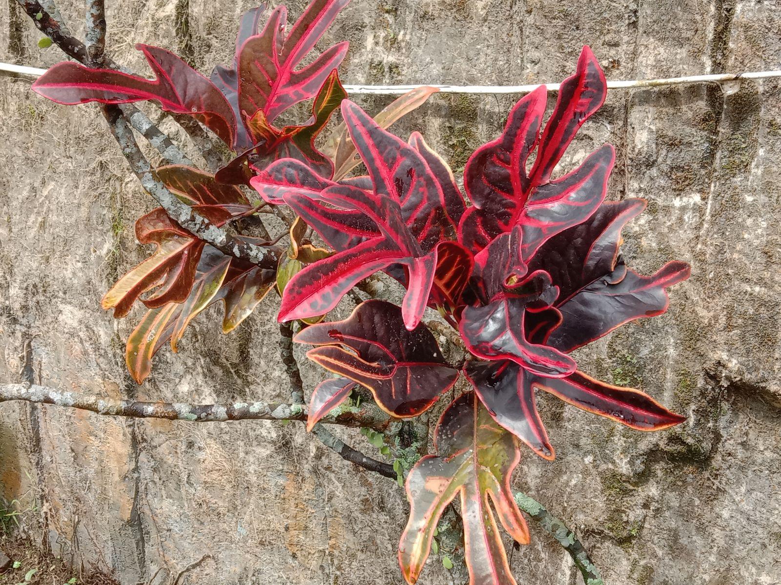 tanaman cantik