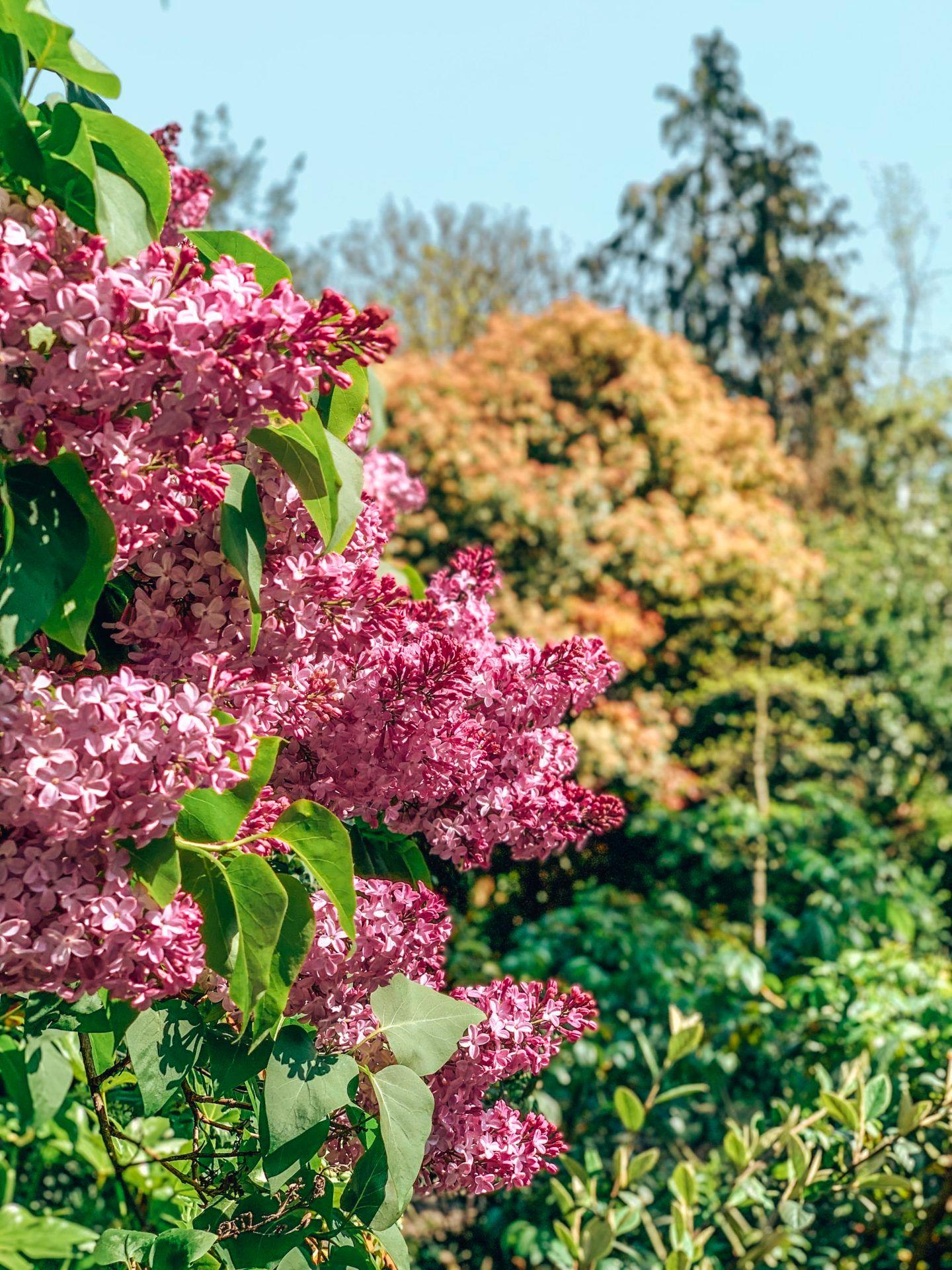 Spring blossom in London