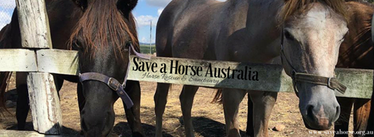 """Find all the information you need about what we do and the horses in care at www.saveahorse.org.au."""